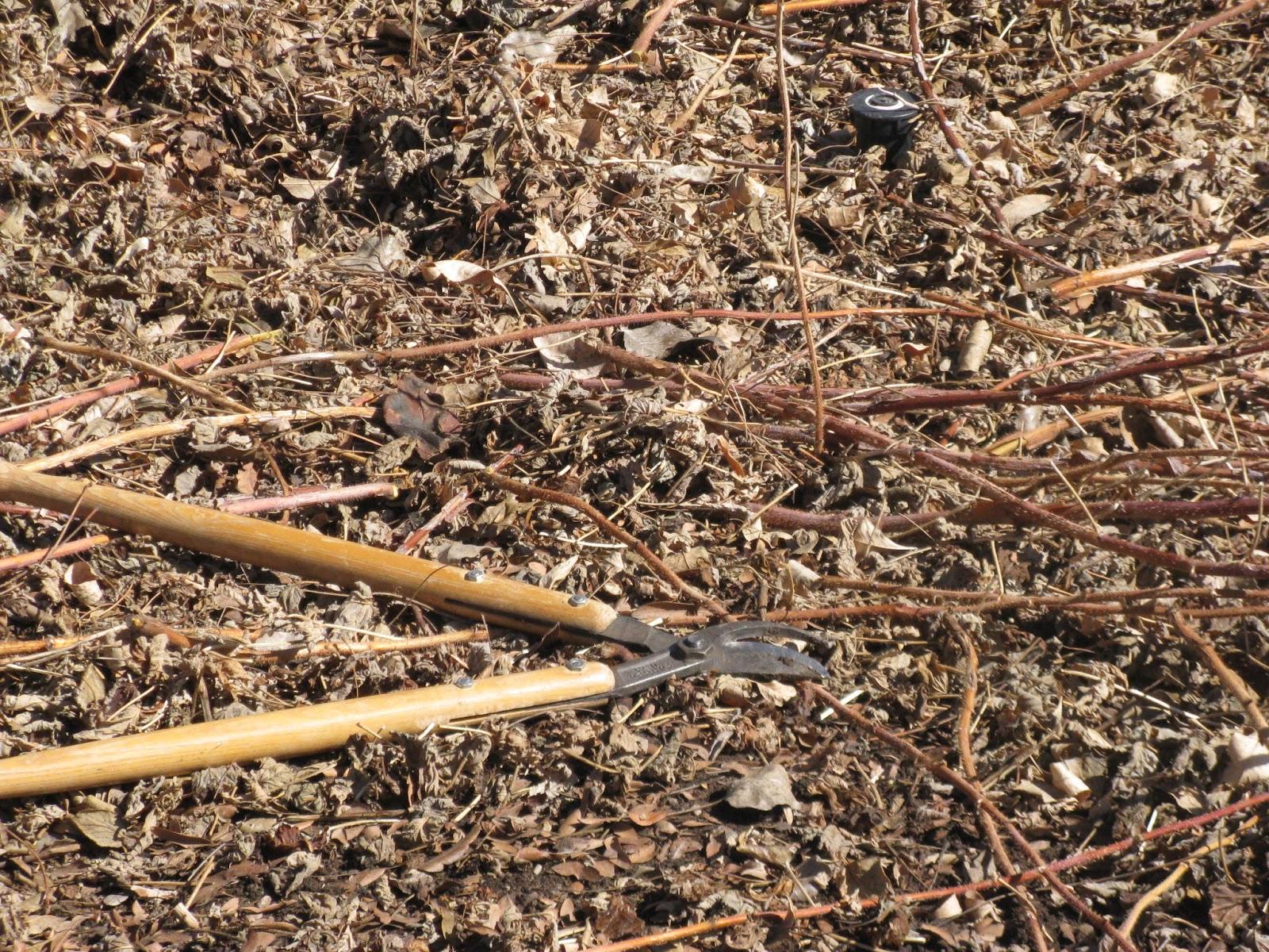 Should You Rake Leaves Fall