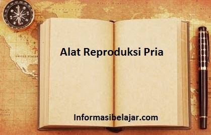 Alat Reproduksi Pria