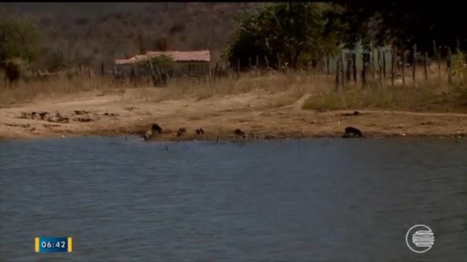 Com 'Operação Carro-Pipa' suspensa, piauienses são obrigados a beber água com fezes