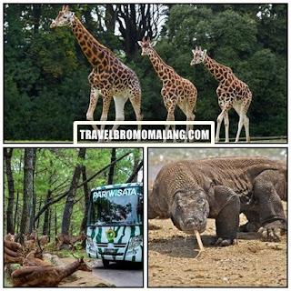 http://www.travelbromomalang.com/2016/06/paket-wisata-bromo-taman-safari-2-hari.html