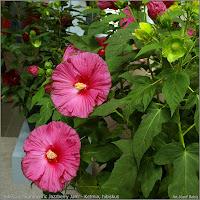 Flower Kwiat
