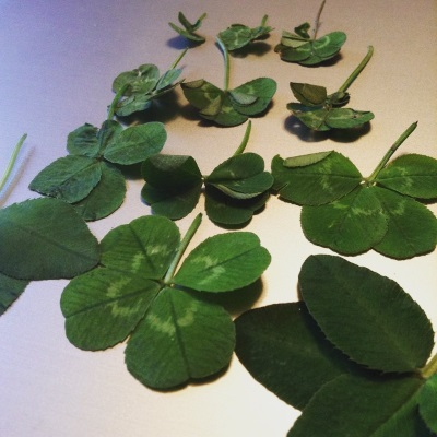 Twelve four-leaf clovers laid out in four rows of three.