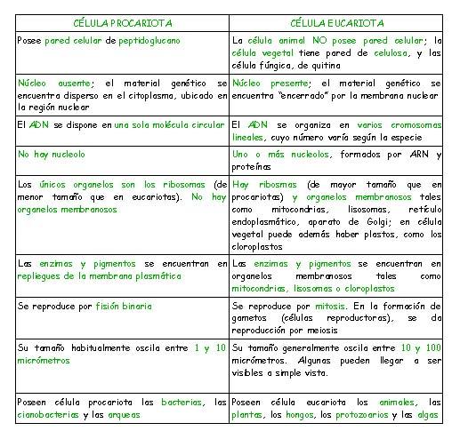 Celulas Eucariotas Y Procariotas Ciencia Y Educación En