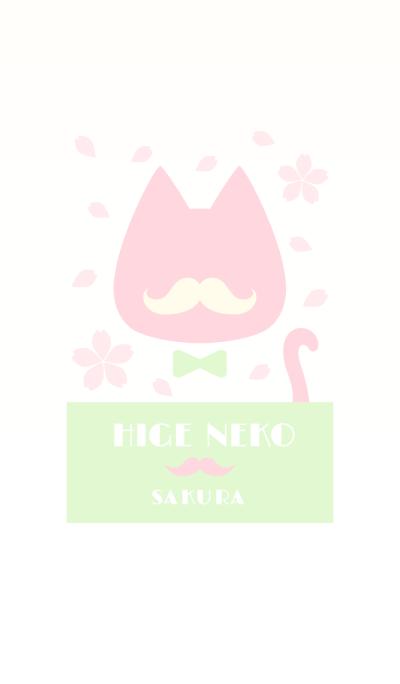 Beard cat SAKURA