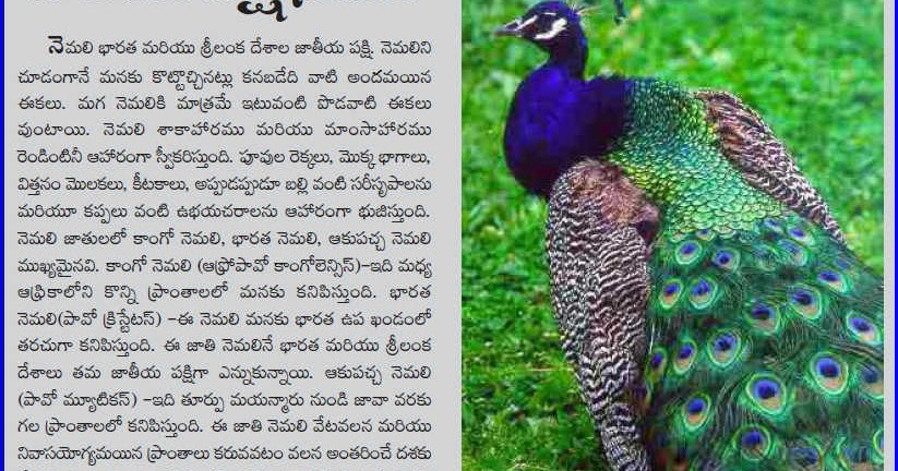 Essay On Peacock | Short Note On Peacock | Composition On Peacock
