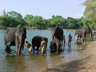 Dubare Elephant Camp - Coorg