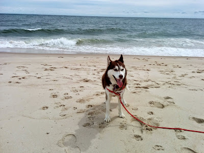 Dog Friendly Beaches Eastern Long Island