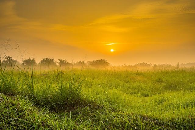 Sehat dengan Matahari pagi