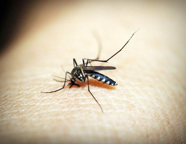 zika virus spreads in india