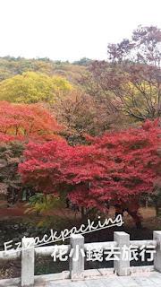 11月內藏山紅葉