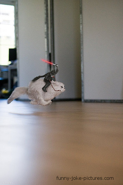 Funny Star Wars Cat Joke Picture