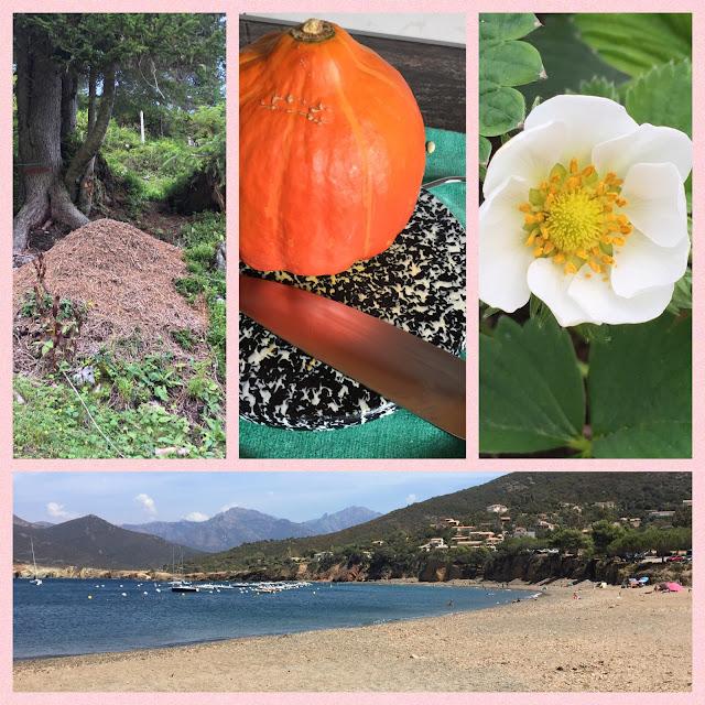 Ameisenhaufen, Kürbissuppe, Erdbeerblüte und Meer auf Korsika