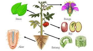 macam-macam organ pada tumbuhan