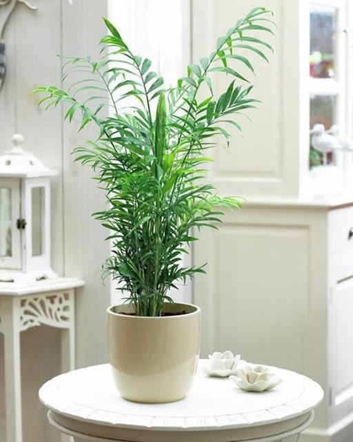 palmeira-no-quarto-abrirjanela