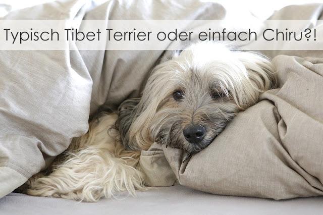 Tibet Terrier Chiru [Hundeblog] Schlafen Tibet Terrier gerne mit im Bett?