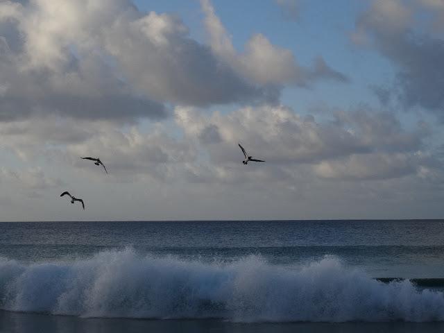 pássaros em Fernando de Noronha