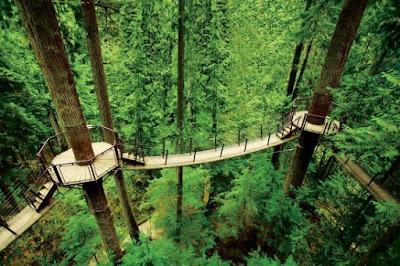 jembatan penghubung antara pohon