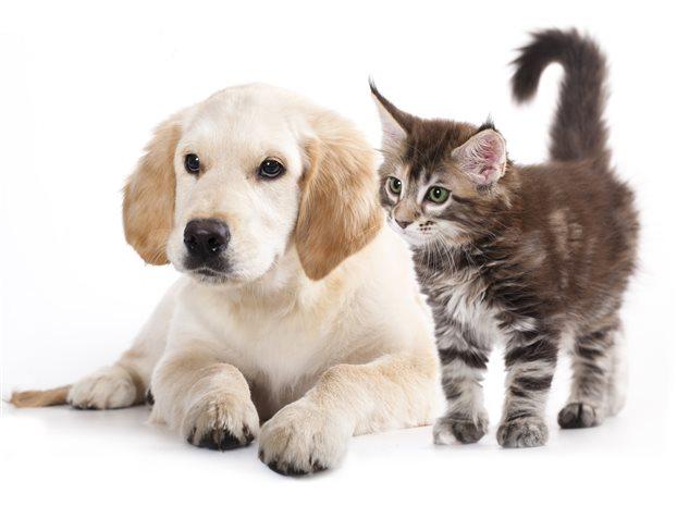 Αποσύρεται το νομοσχέδιο για τα ζώα - Εντός 30 ημερών το διορθωμένο