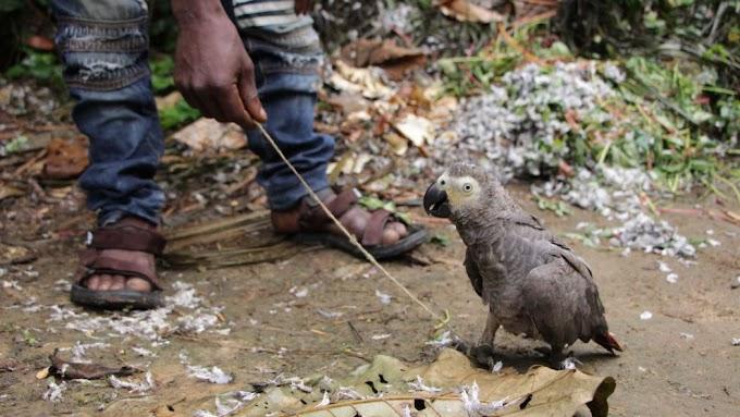 Assine   Envie uma mensagem à Turkish Airlines a pedir que não colabore com o tráfico de animais selvagens   AGIR
