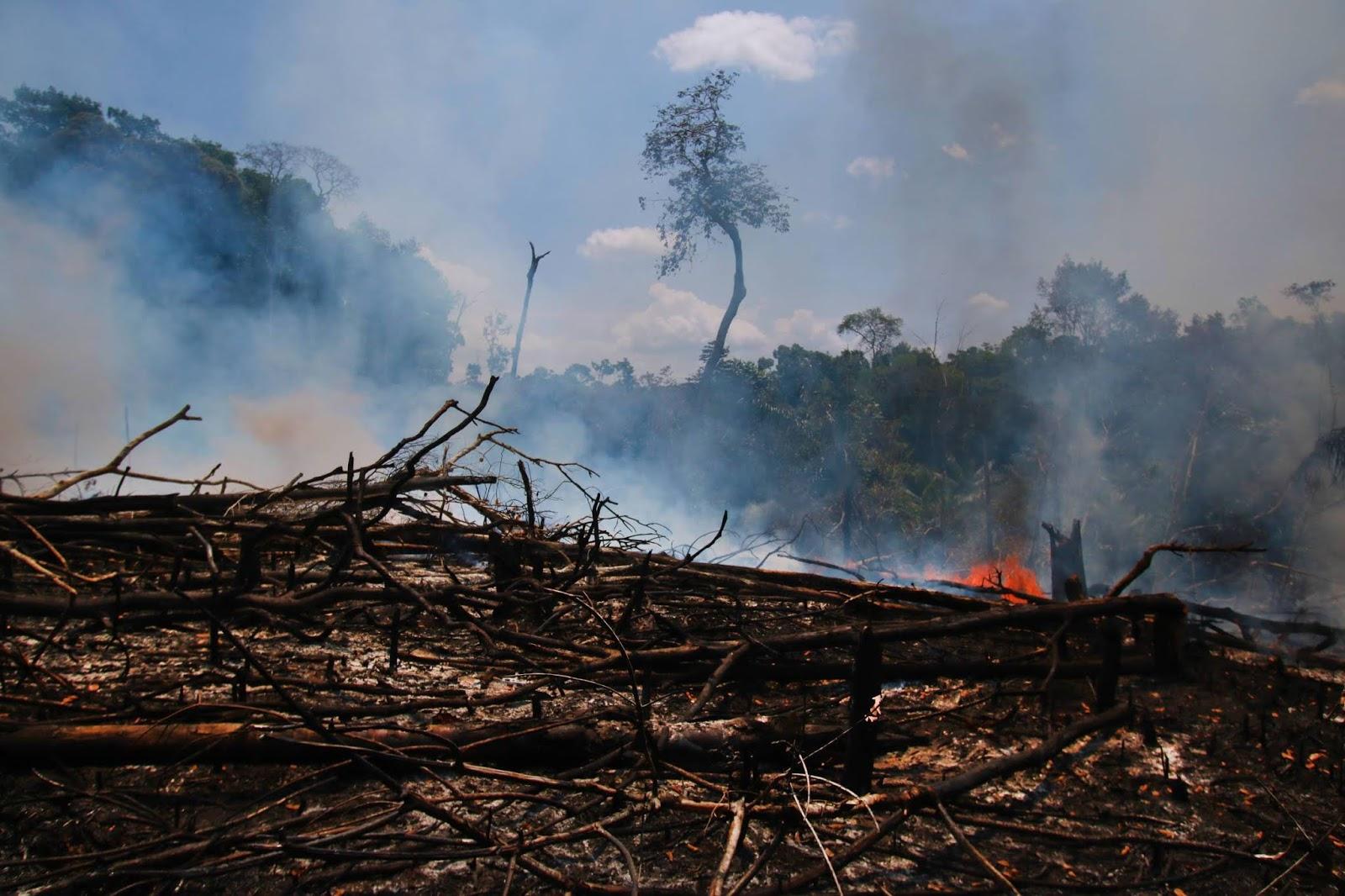 Amazônia: urbanização, desmatamentos e queimadas. Por Manoel Silva e Dornélio Silva