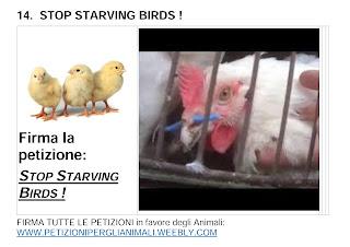 STOP STARVING BIRDS !