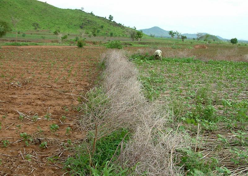 Agriculture - Changement climatique Afrique Cameroun