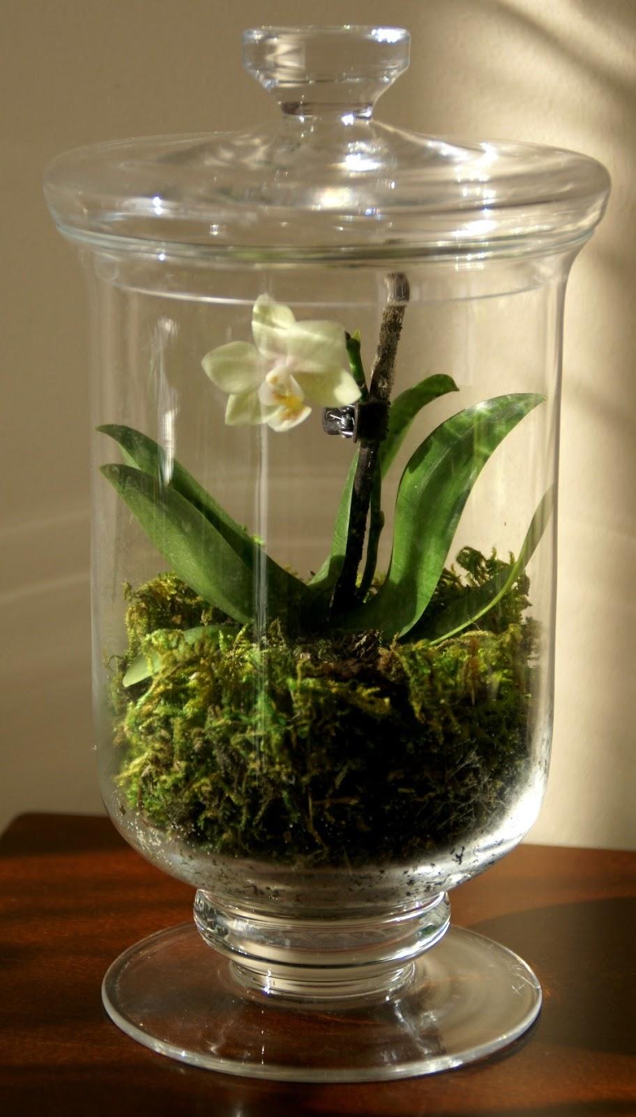 speckled fawn en flower power terrarium update. Black Bedroom Furniture Sets. Home Design Ideas