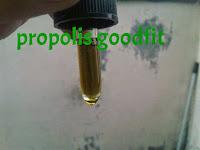 obat herbal untuk infeksi saluran kemih