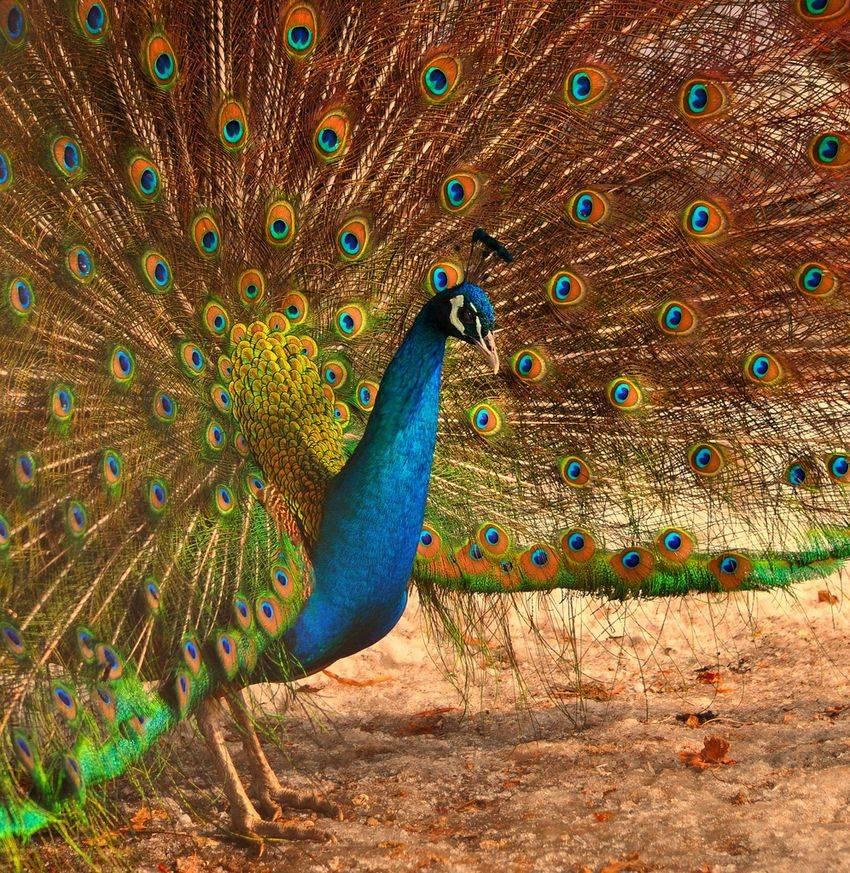 Amazing World & Fun: Beautiful Colorful Birds - Nature