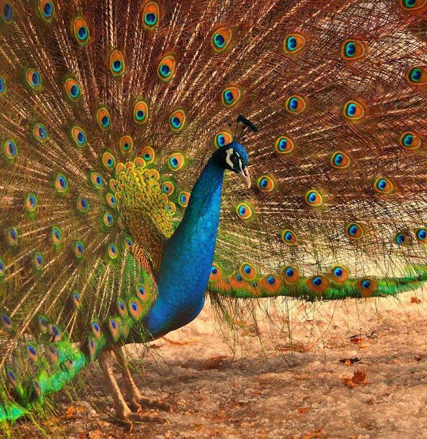 Amazing World & Fun: Beautiful Colorful Birds - Nature - photo#21