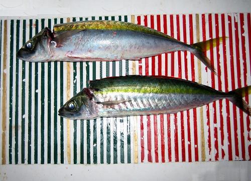 関西の船釣りで釣れる 竿とリール 和歌山 金ムロ