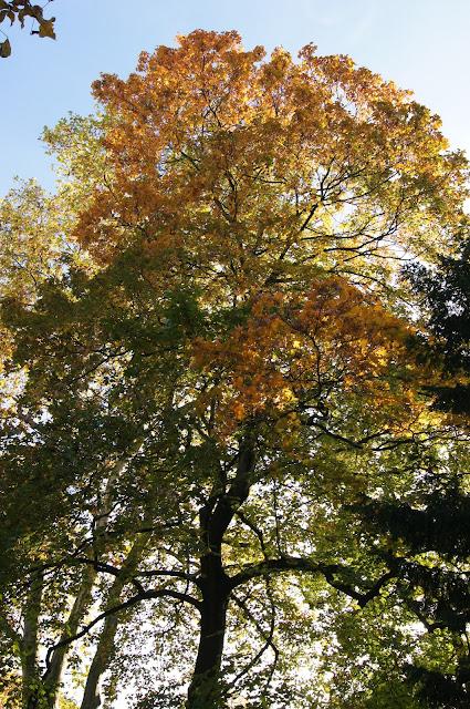 Herbstliebe - BIWYFI