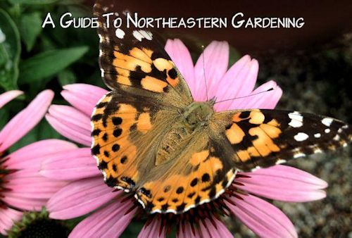A guide to northeastern gardening late summer and fall blooming perennials - Fall blooming flowers ...