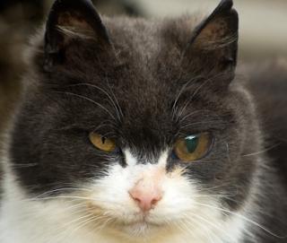 Penyebab mata berair pada kucing