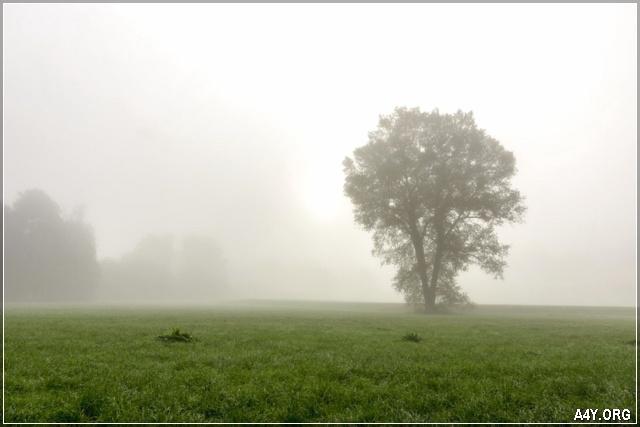 ảnh sương mù của mùa đông đang về