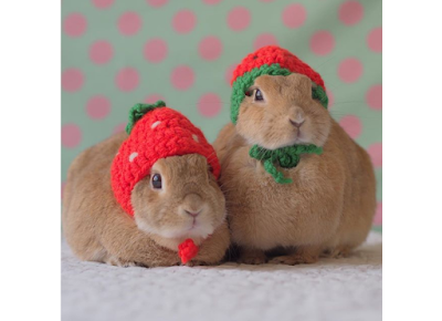 Rabbits on Instagram to follow