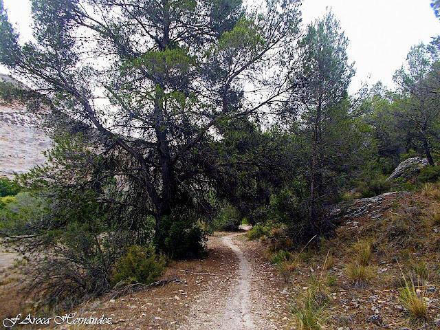 Valdeganga (Albacete).