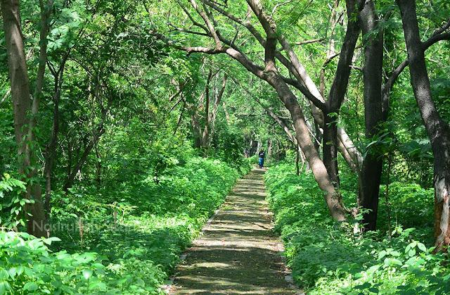Jalanan yang kunikmati selama di Pulau Panjang