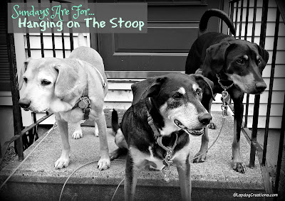 3 happy rescue dogs hanging on the stoop