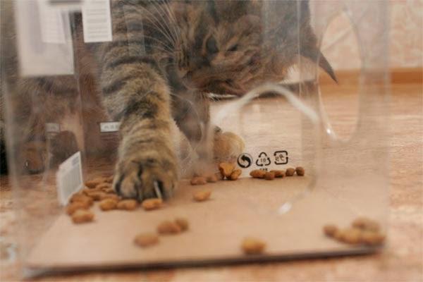 кормушка для кошек crazy cat