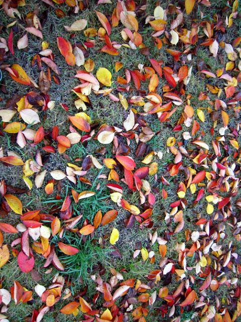 晩秋の落ち葉