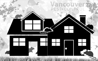 rodent control Vancouver