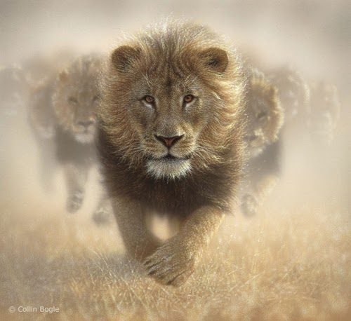 05-Lions-Collin-Bogle-Animal-Wildlife-in-Art-www-designstack-co