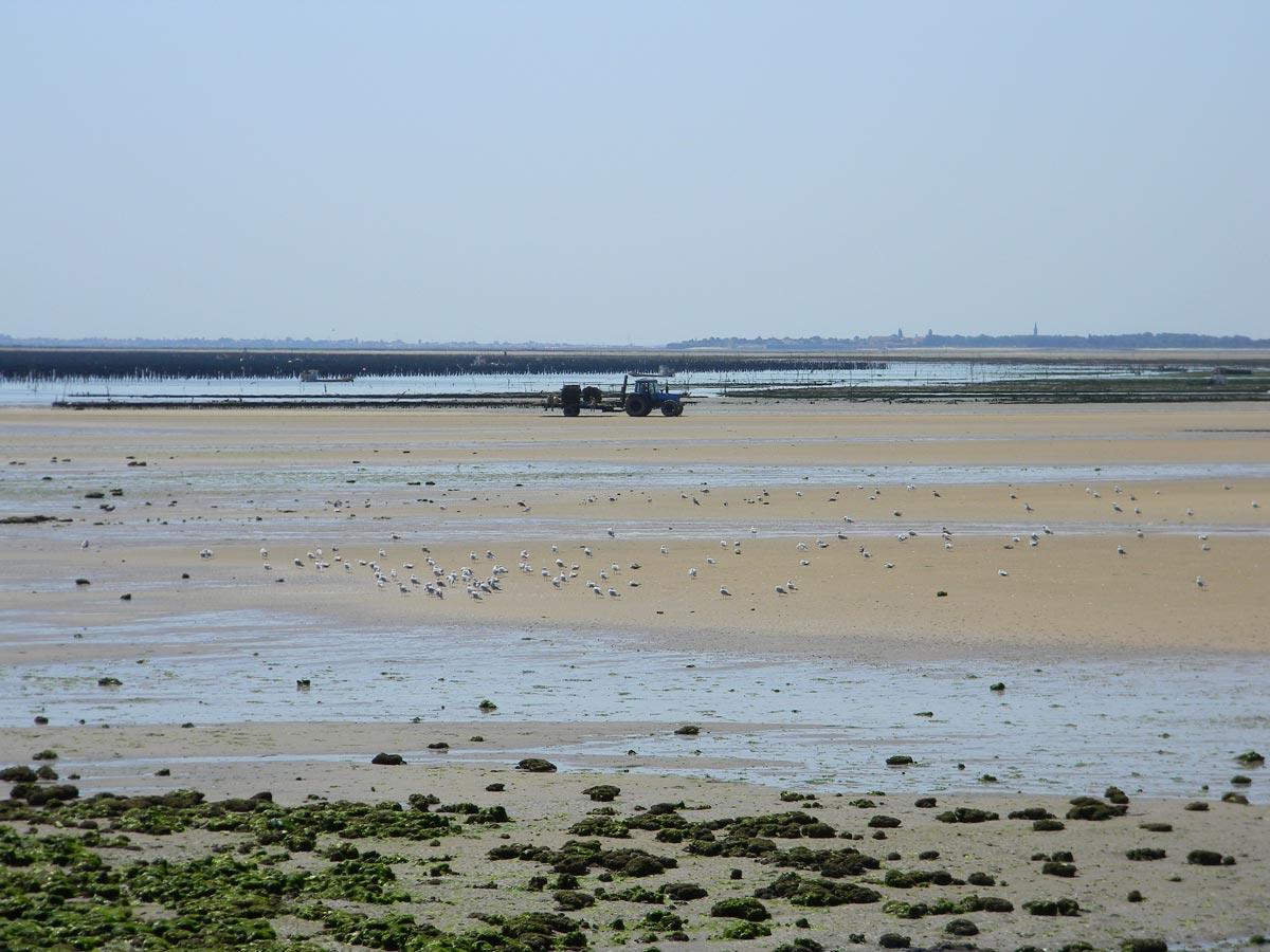 Un tracteur sur la plage de Boyardville, île d'Oléron