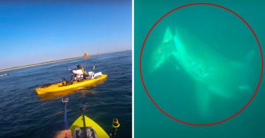 Hombre capta en video ataque de un tiburón gigante