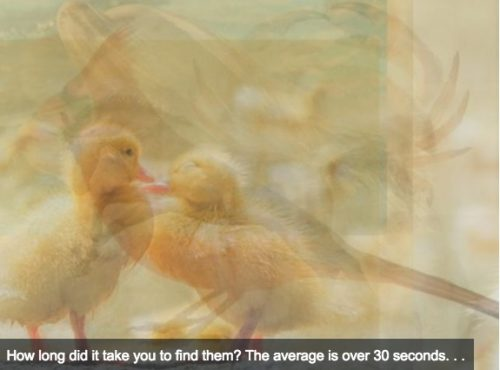 Quiz: Which Is This Animal? Your Answer Will Reveal Your Personality