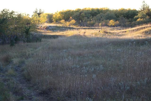prairie grass on hills by forest