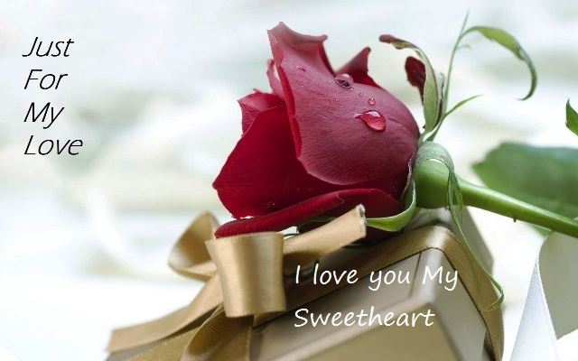 rose day messages, rose day text messages