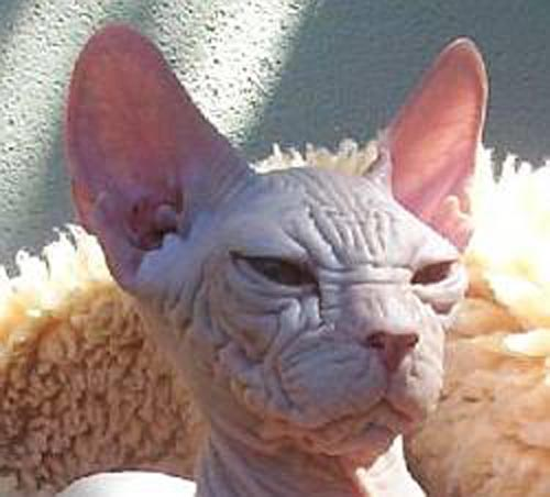 Colour my LiFe: When you google... UGLY CATS