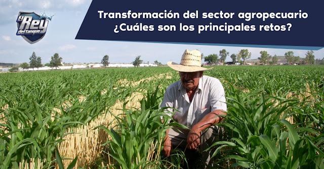 transformacion-del-sector-agropecuario-cuales-son-los-principales-retos